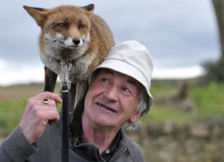 Patsy Gibbons et son renard