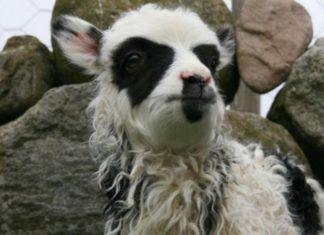 10 animaux aux pelages particuliers qui montrent tout le sens de l'humour de mère Nature. │ MiniBuzz