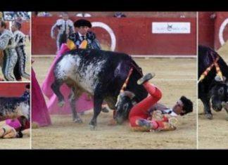Un torero meurt après un coup de corne fatal │MiniBuzz
